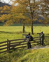 elk photographers in Boxley Valley